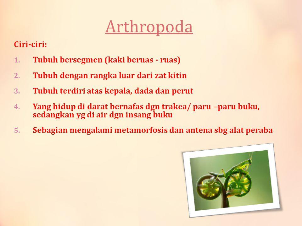 Arthropoda Ciri-ciri: Tubuh bersegmen (kaki beruas - ruas)