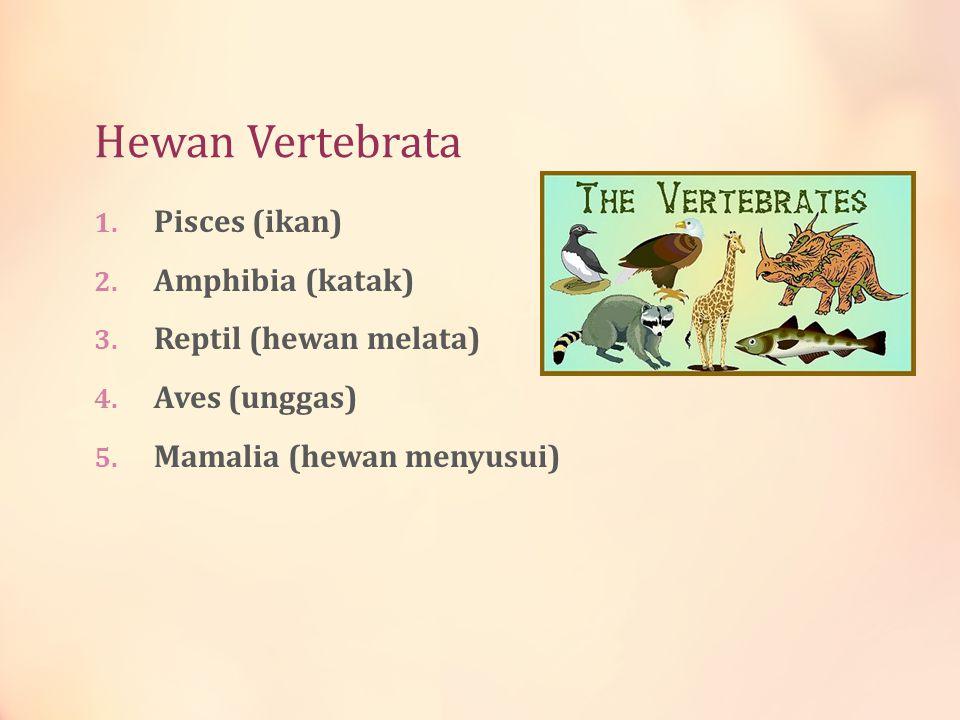 Hewan Vertebrata Pisces (ikan) Amphibia (katak) Reptil (hewan melata)
