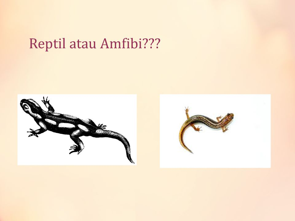 Reptil atau Amfibi