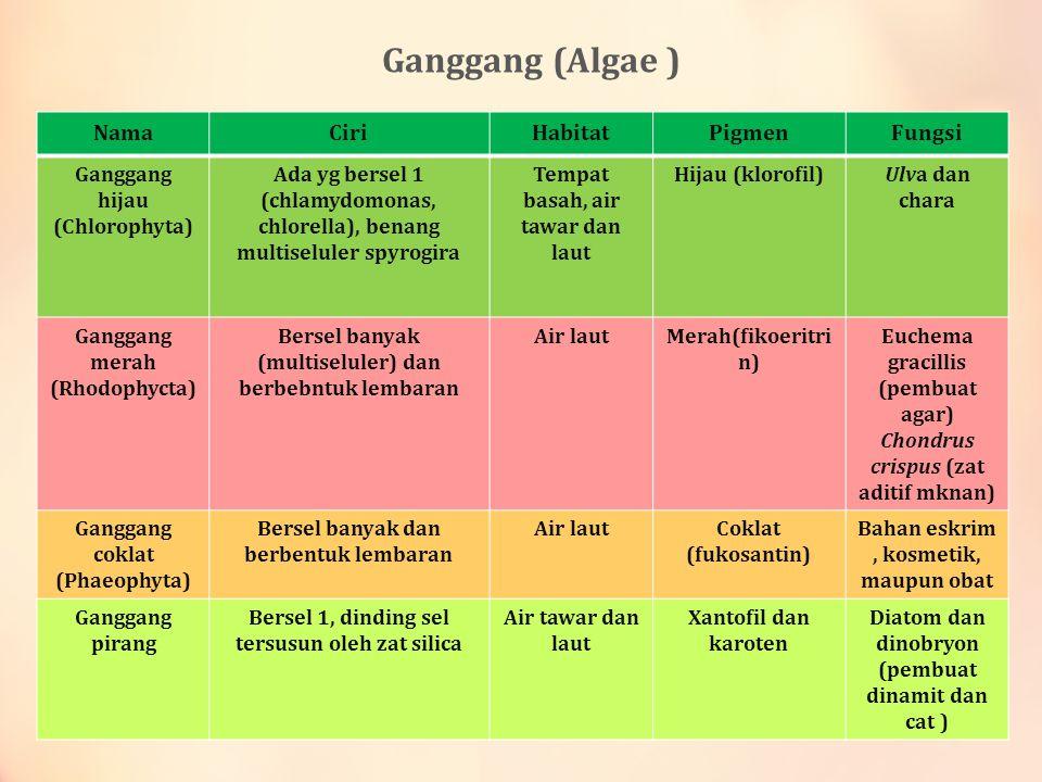 Ganggang (Algae ) Nama Ciri Habitat Pigmen Fungsi Ganggang hijau