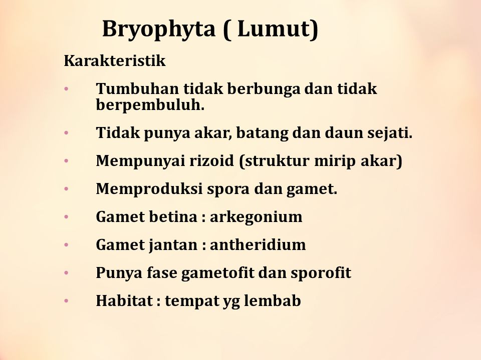 Bryophyta ( Lumut) Karakteristik
