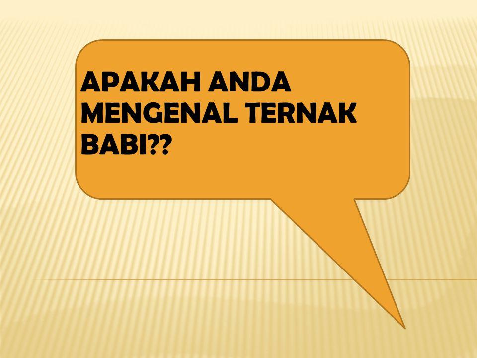APAKAH ANDA MENGENAL TERNAK BABI