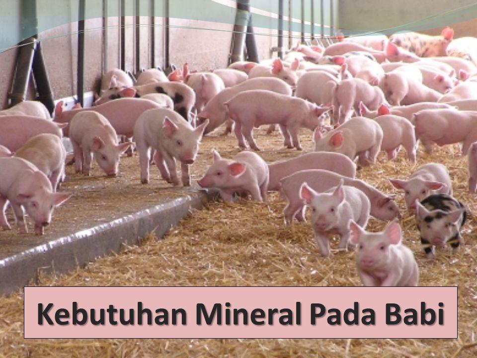 Kebutuhan Mineral Pada Babi