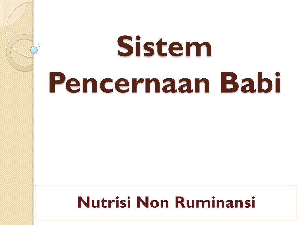 Sistem Pencernaan Babi