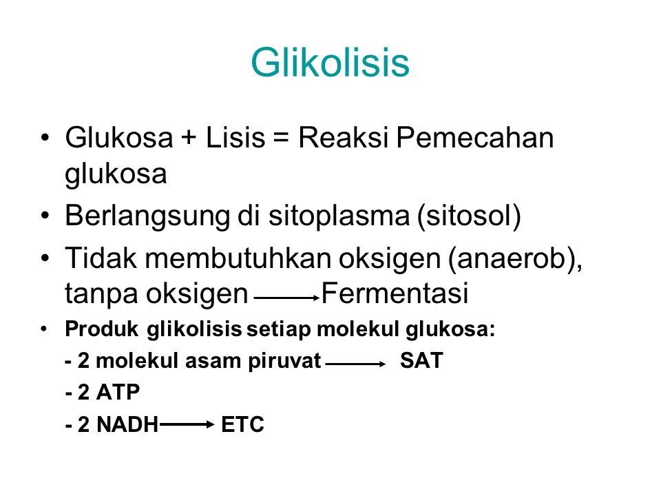 Glikolisis Glukosa + Lisis = Reaksi Pemecahan glukosa