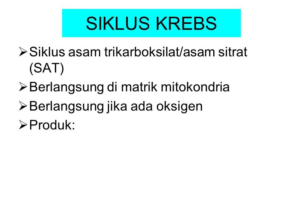 SIKLUS KREBS Siklus asam trikarboksilat/asam sitrat (SAT)