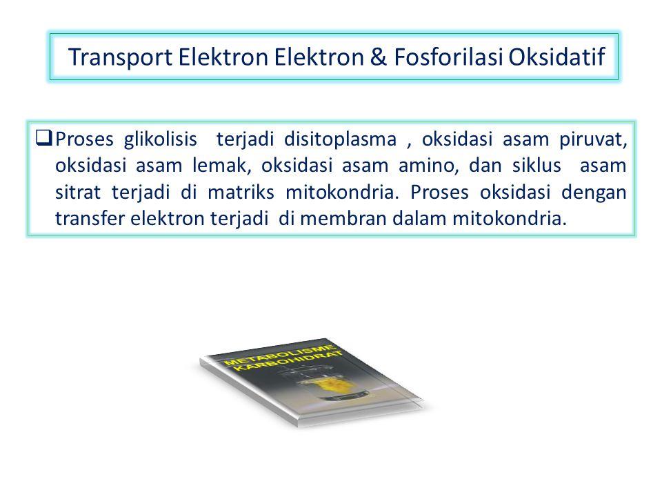 Transport Elektron Elektron & Fosforilasi Oksidatif