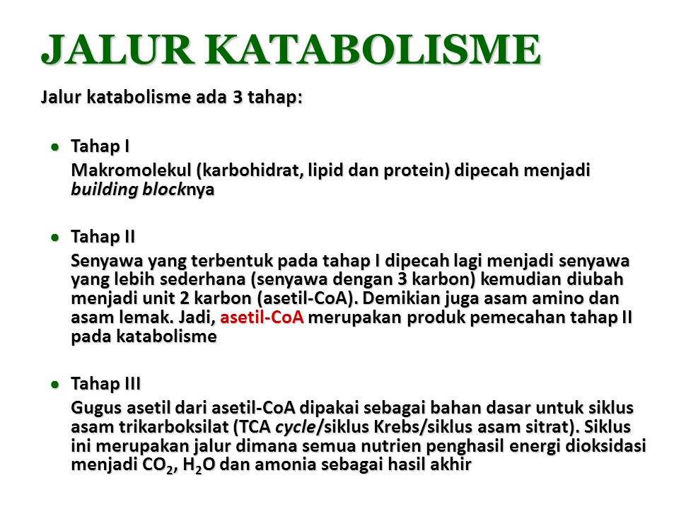 JALUR KATABOLISME Jalur katabolisme ada 3 tahap: Tahap I
