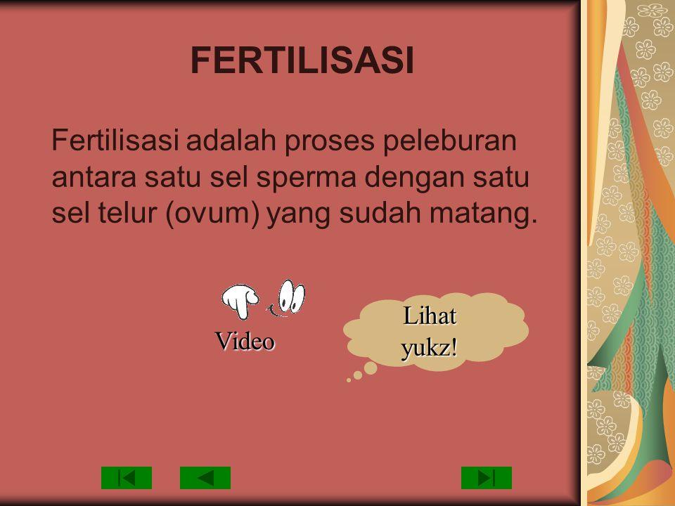 FERTILISASI Fertilisasi adalah proses peleburan antara satu sel sperma dengan satu sel telur (ovum) yang sudah matang.