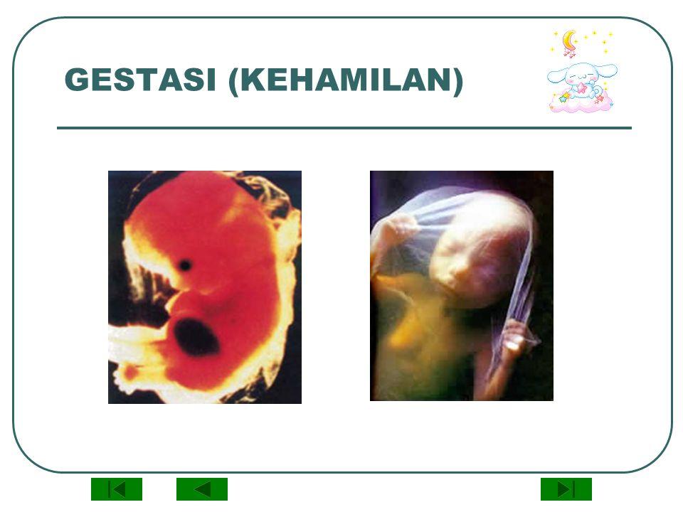 GESTASI (KEHAMILAN)