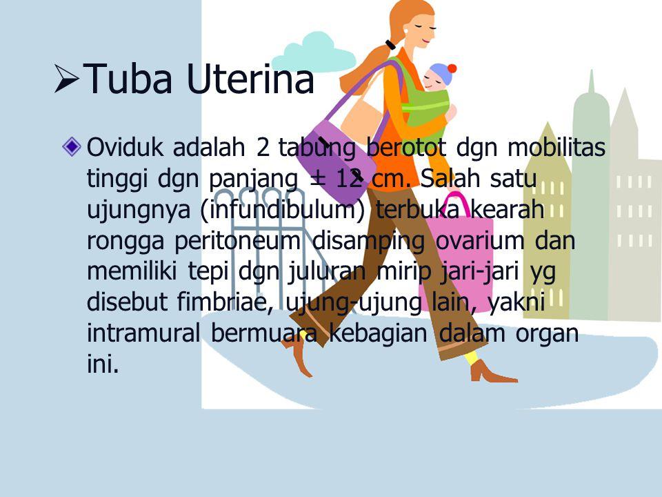 Tuba Uterina