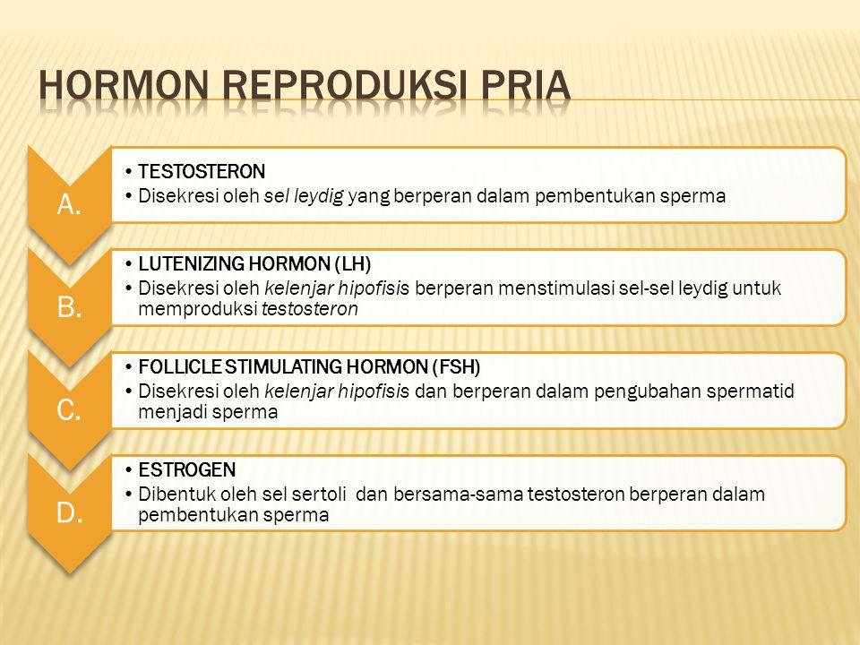 Hormon Reproduksi Pria
