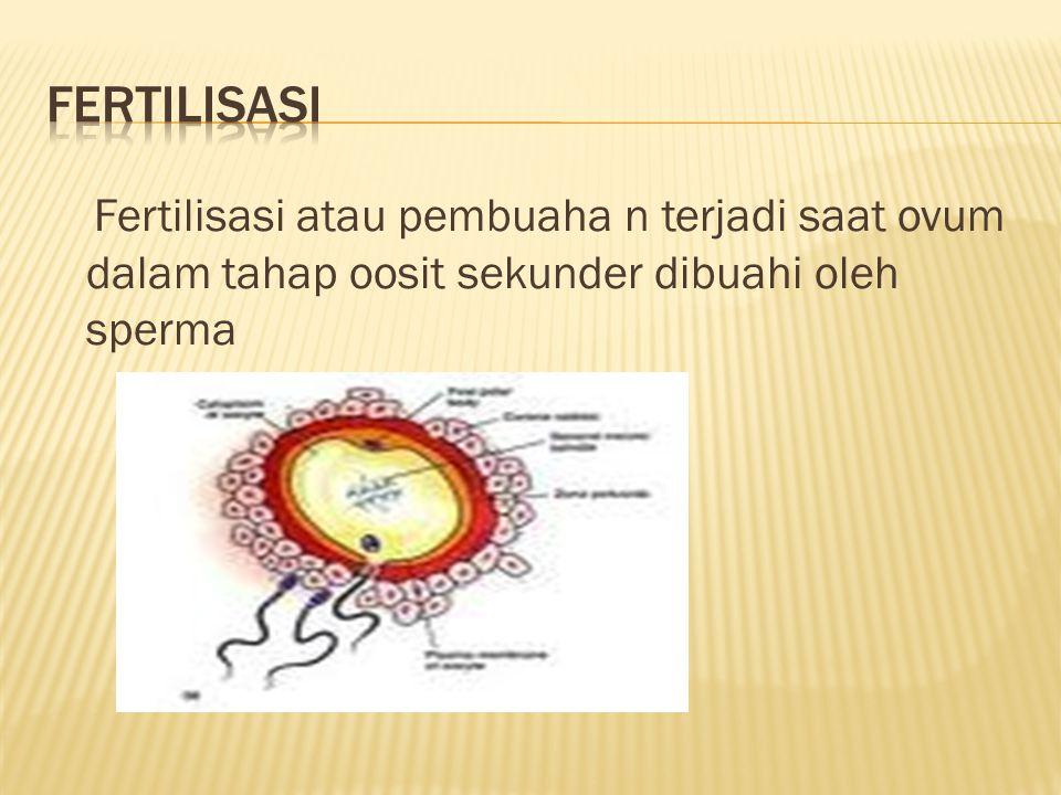 FERTILISASI Fertilisasi atau pembuaha n terjadi saat ovum dalam tahap oosit sekunder dibuahi oleh sperma.