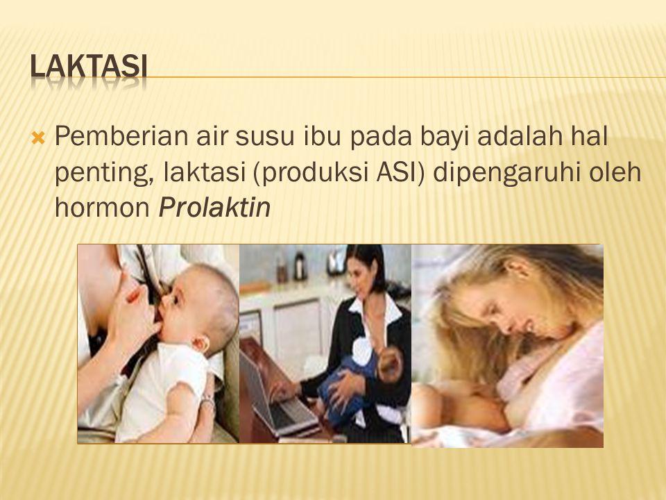 Laktasi Pemberian air susu ibu pada bayi adalah hal penting, laktasi (produksi ASI) dipengaruhi oleh hormon Prolaktin.