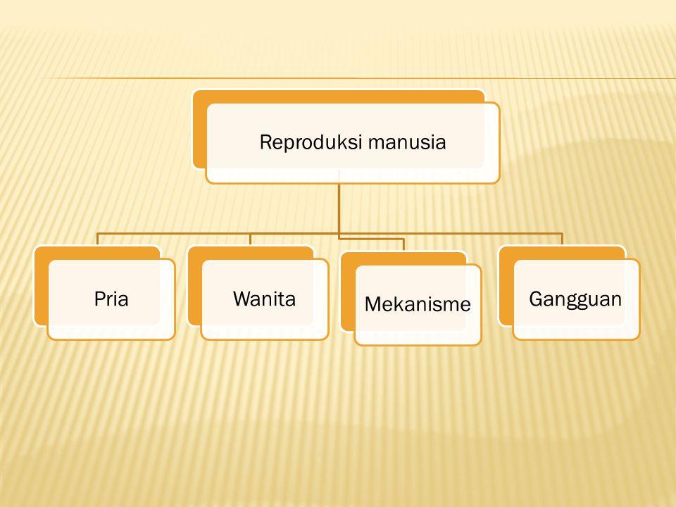 Reproduksi manusia Pria Wanita Mekanisme Gangguan