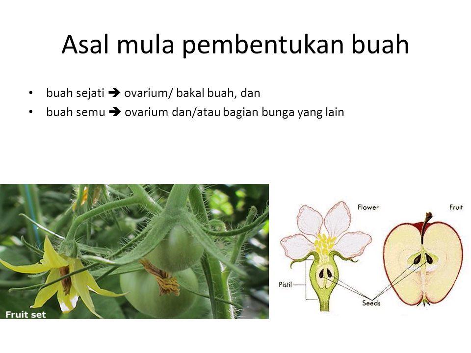 Asal mula pembentukan buah