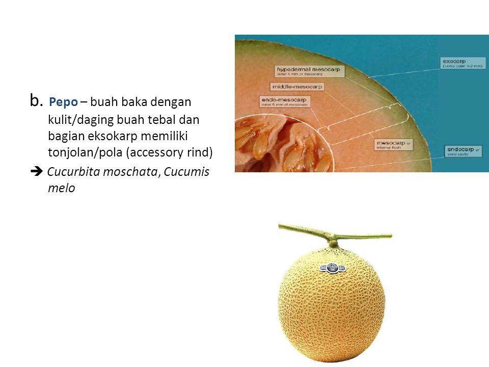 b. Pepo – buah baka dengan kulit/daging buah tebal dan bagian eksokarp memiliki tonjolan/pola (accessory rind)