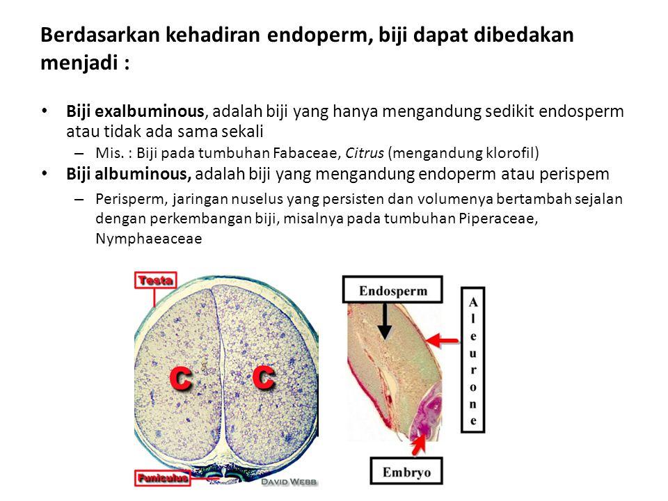 Berdasarkan kehadiran endoperm, biji dapat dibedakan menjadi :