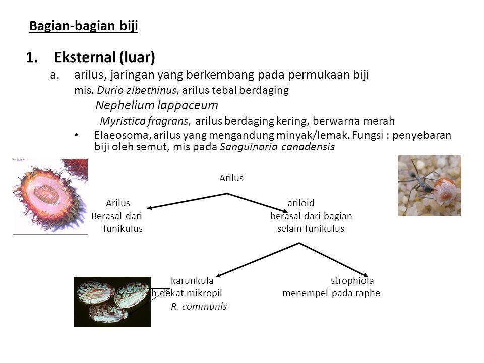 Eksternal (luar) Arilus Bagian-bagian biji