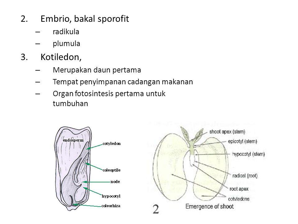 Embrio, bakal sporofit Kotiledon, radikula plumula