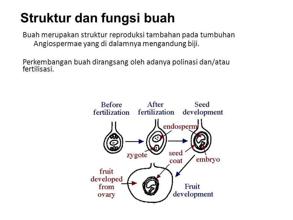 Struktur dan fungsi buah