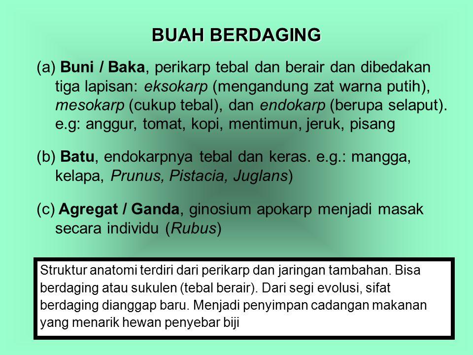 BUAH BERDAGING