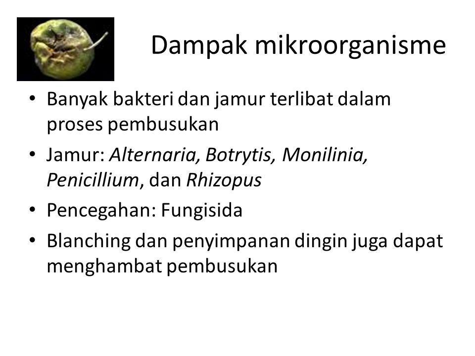 Dampak mikroorganisme