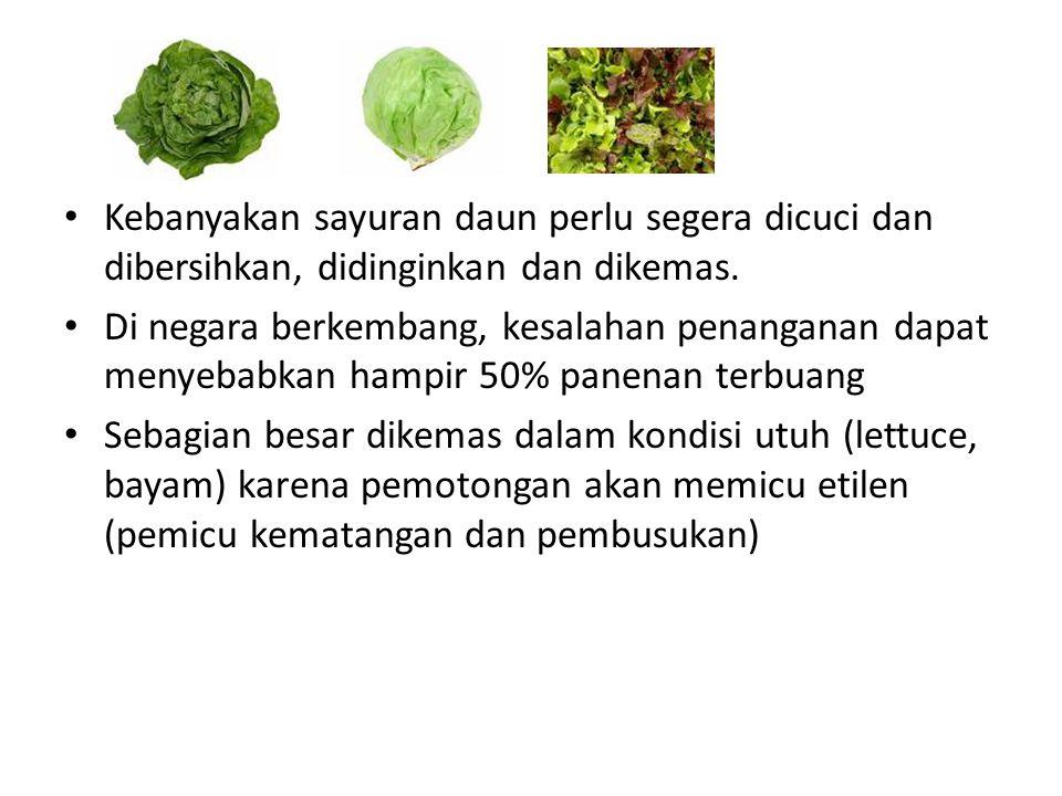 Kebanyakan sayuran daun perlu segera dicuci dan dibersihkan, didinginkan dan dikemas.
