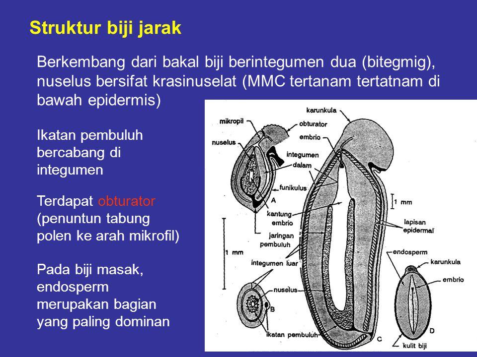 Struktur biji jarak Berkembang dari bakal biji berintegumen dua (bitegmig), nuselus bersifat krasinuselat (MMC tertanam tertatnam di bawah epidermis)