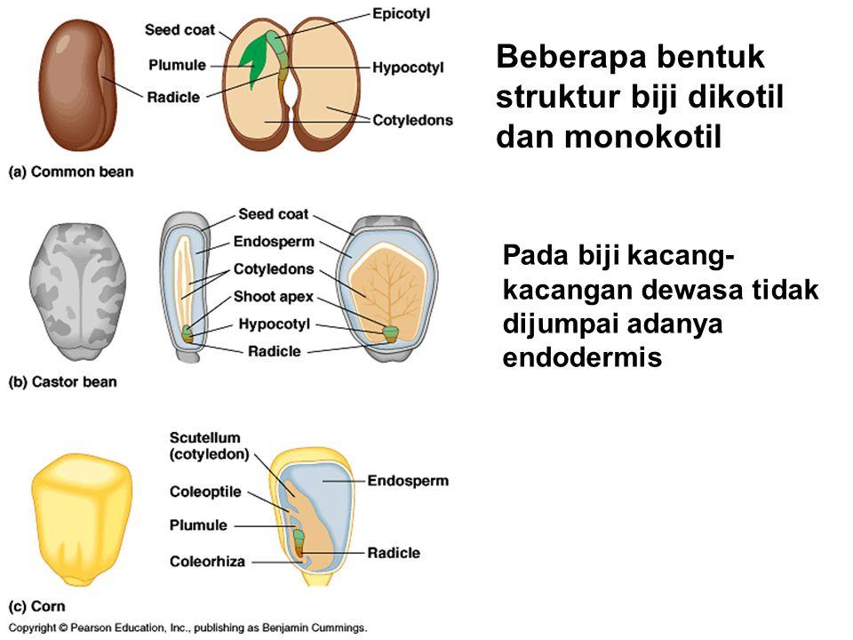 Beberapa bentuk struktur biji dikotil dan monokotil