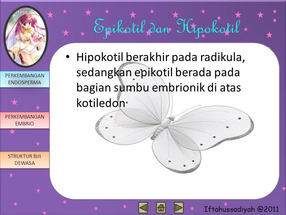 Epikotil dan Hipokotil