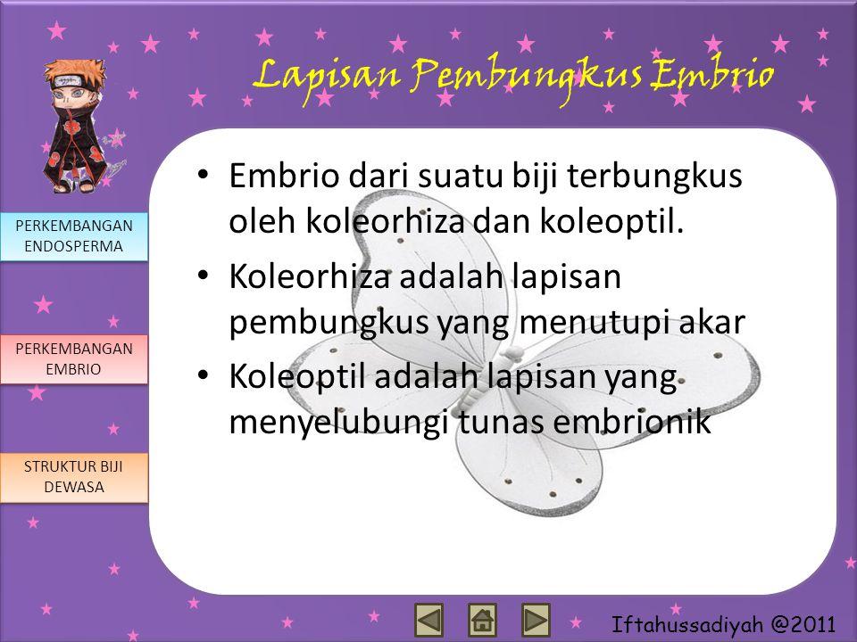 Lapisan Pembungkus Embrio