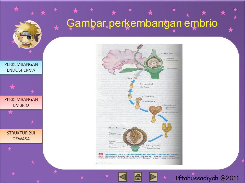 Gambar perkembangan embrio