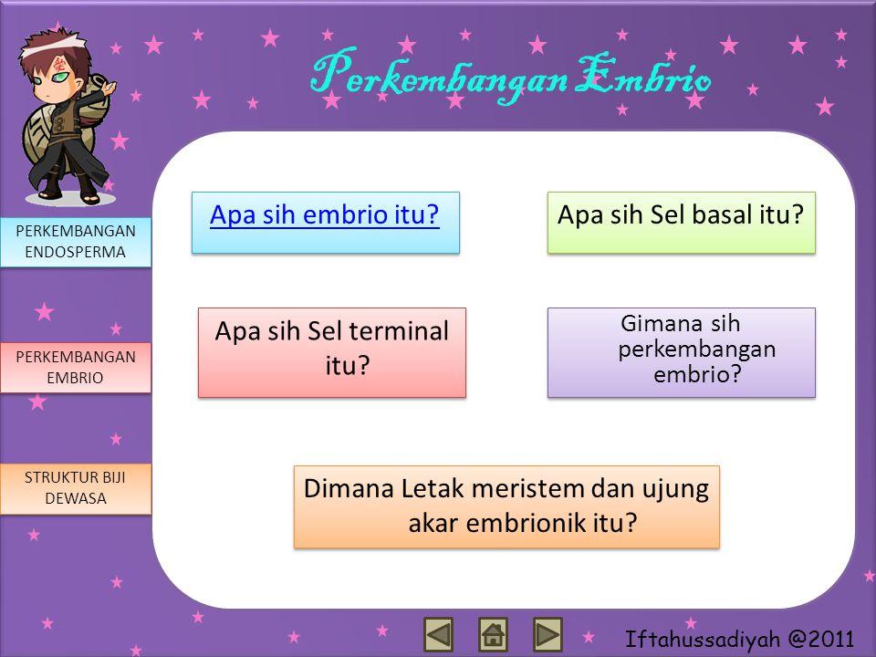 Perkembangan Embrio Apa sih embrio itu Apa sih Sel basal itu