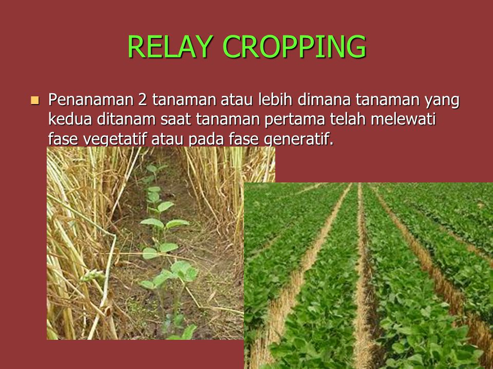 RELAY CROPPING