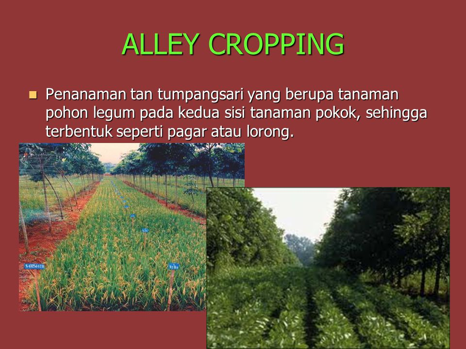 ALLEY CROPPING