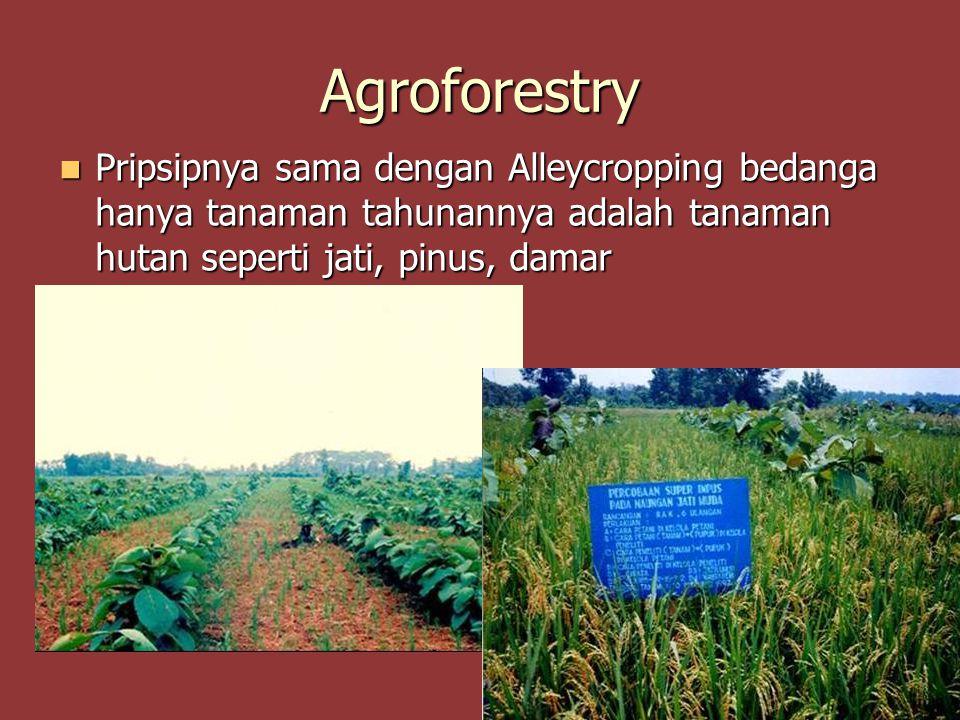 Agroforestry Pripsipnya sama dengan Alleycropping bedanga hanya tanaman tahunannya adalah tanaman hutan seperti jati, pinus, damar.