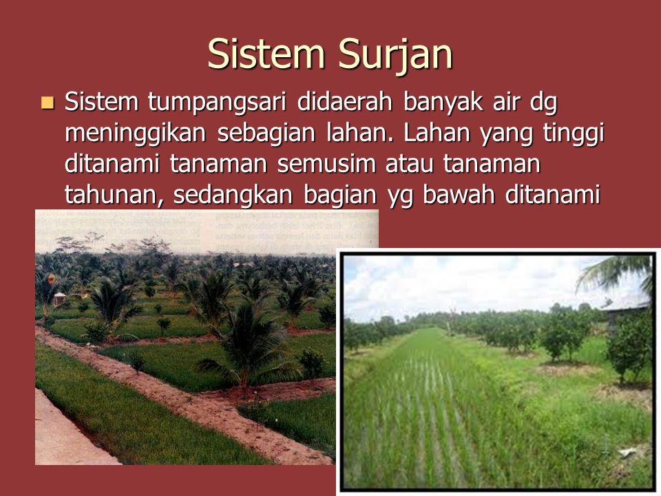 Sistem Surjan