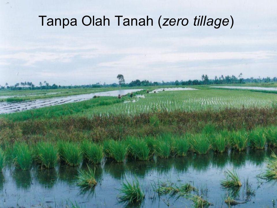 Tanpa Olah Tanah (zero tillage)