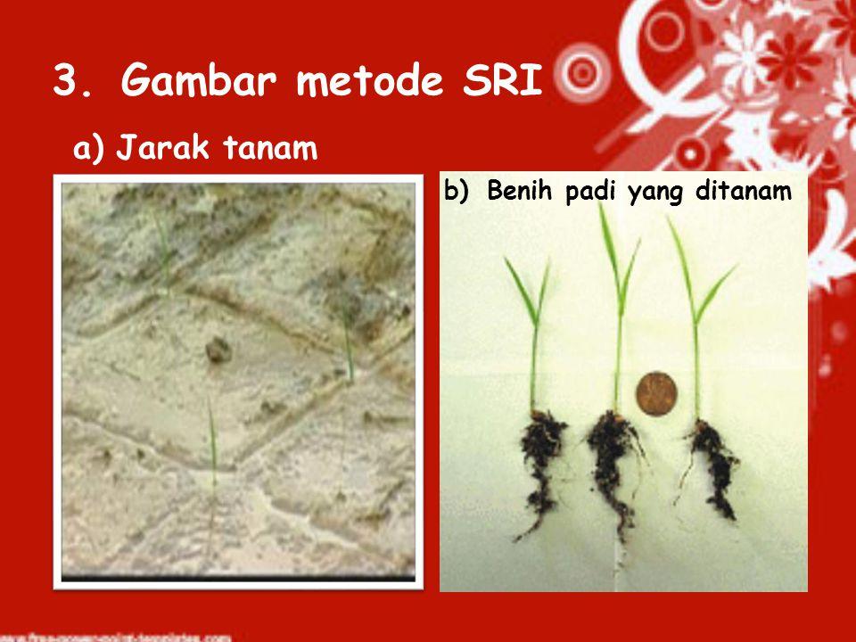 Gambar metode SRI Jarak tanam Benih padi yang ditanam