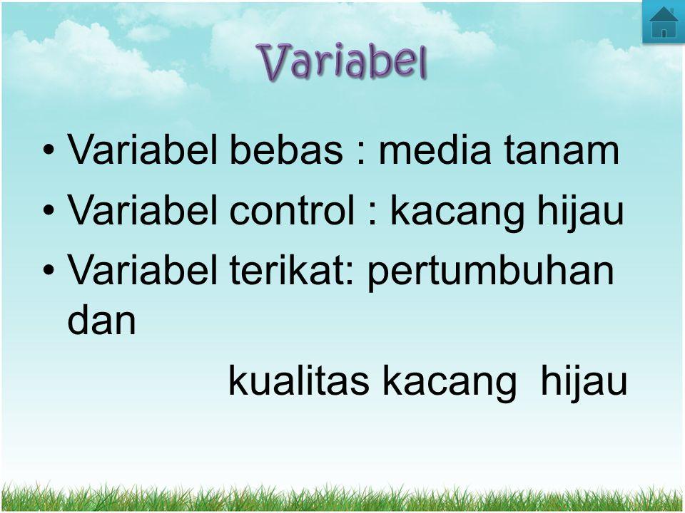 Variabel Variabel bebas : media tanam. Variabel control : kacang hijau. Variabel terikat: pertumbuhan dan.