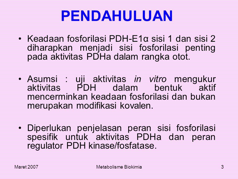 PENDAHULUAN Keadaan fosforilasi PDH-E1α sisi 1 dan sisi 2 diharapkan menjadi sisi fosforilasi penting pada aktivitas PDHa dalam rangka otot.