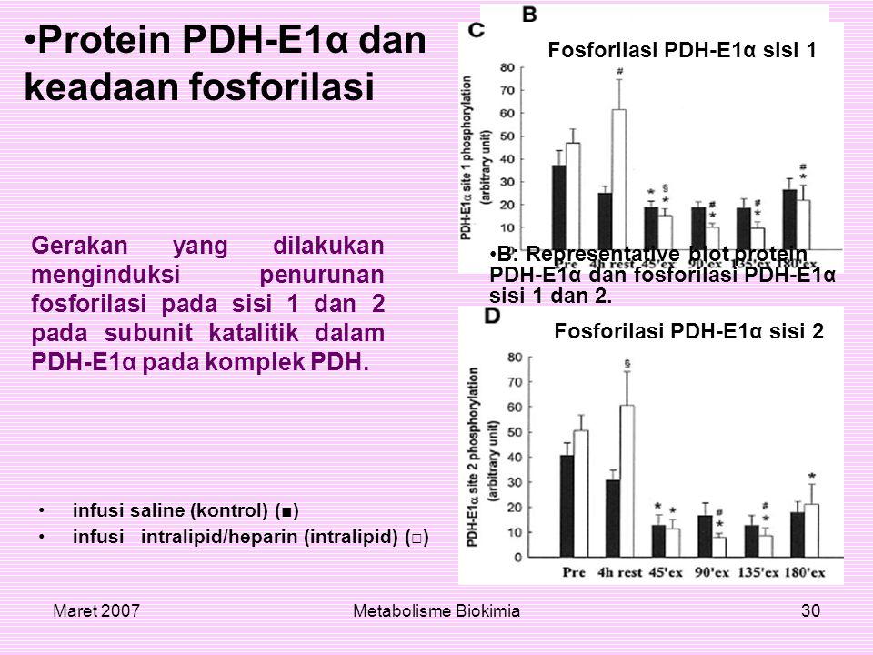 Protein PDH-E1α dan keadaan fosforilasi