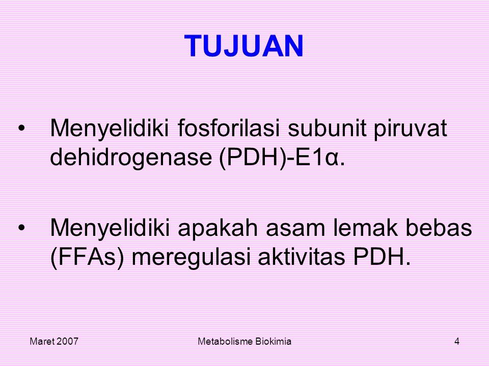 TUJUAN Menyelidiki fosforilasi subunit piruvat dehidrogenase (PDH)-E1α. Menyelidiki apakah asam lemak bebas (FFAs) meregulasi aktivitas PDH.