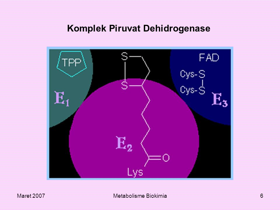 Komplek Piruvat Dehidrogenase