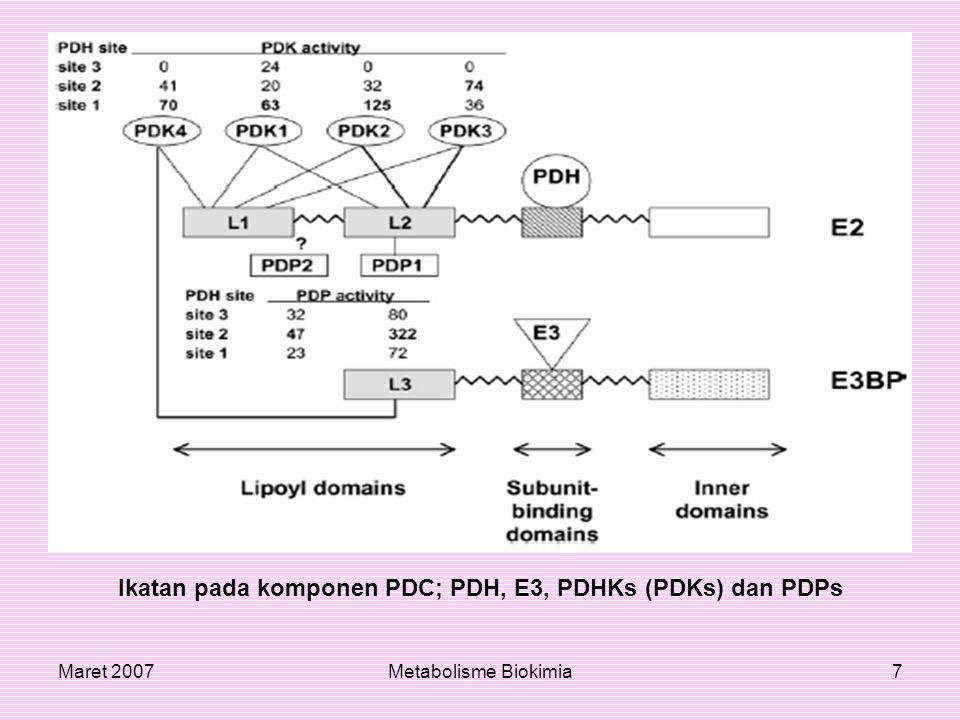 Ikatan pada komponen PDC; PDH, E3, PDHKs (PDKs) dan PDPs
