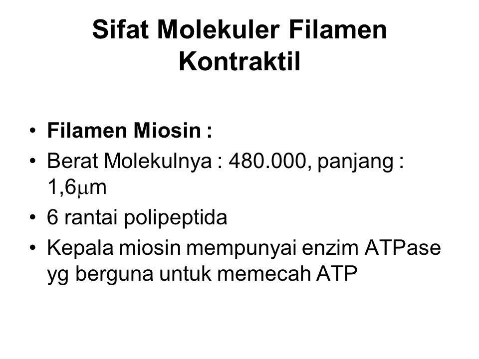 Sifat Molekuler Filamen Kontraktil