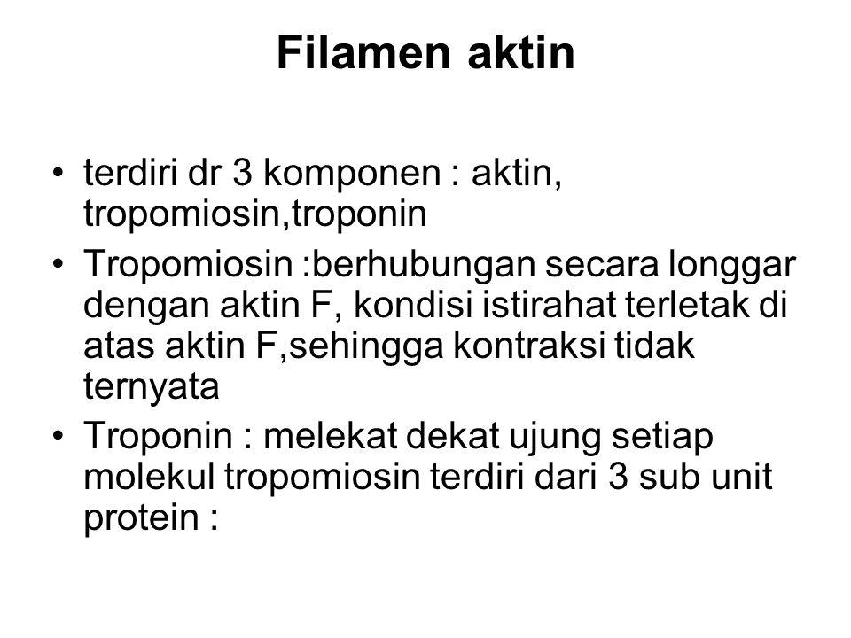 Filamen aktin terdiri dr 3 komponen : aktin, tropomiosin,troponin