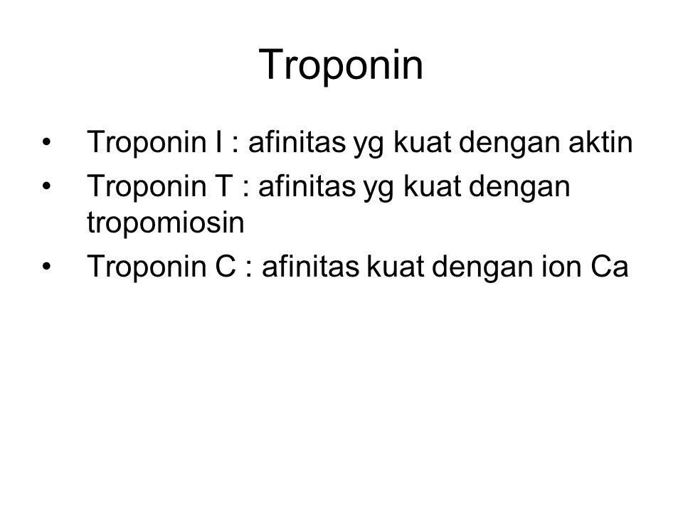 Troponin Troponin I : afinitas yg kuat dengan aktin
