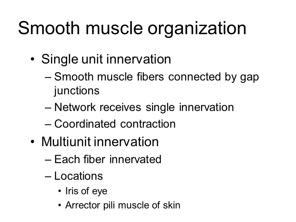 Smooth muscle organization